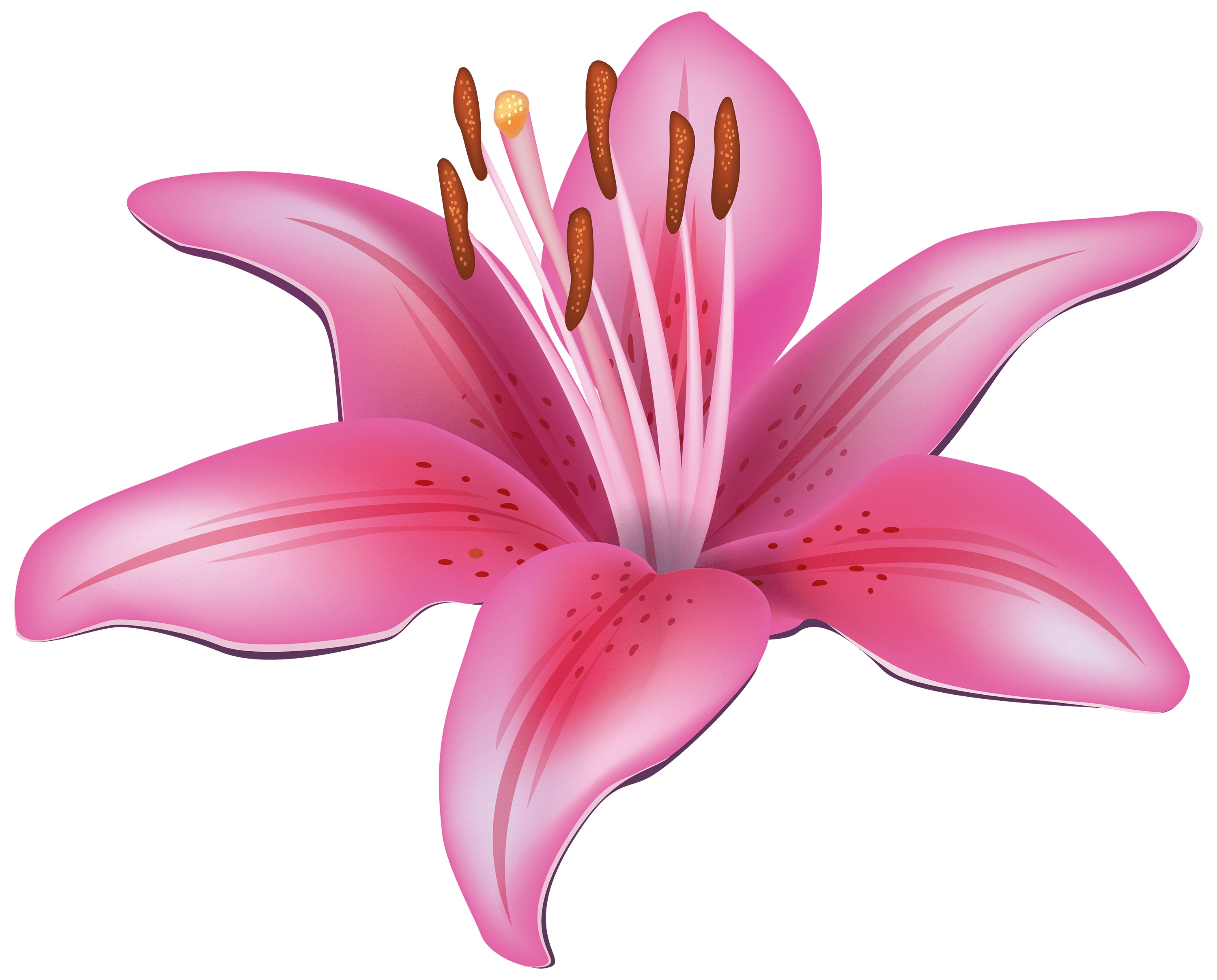 lily free flower clipart image lily clip art 3000 2415